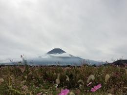 161024_14富士と秋桜