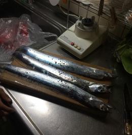 161024_19太刀魚