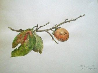 1as枝柿