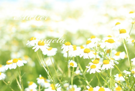 IMG_5648のコピー
