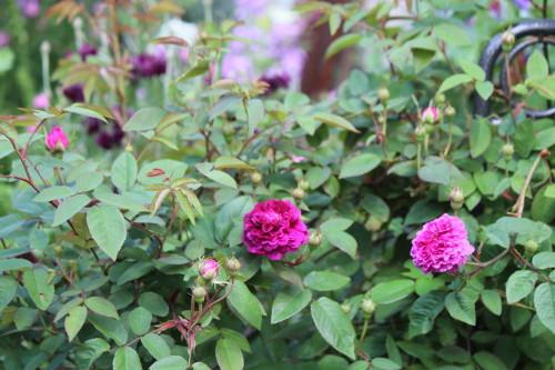紫玉0001_3