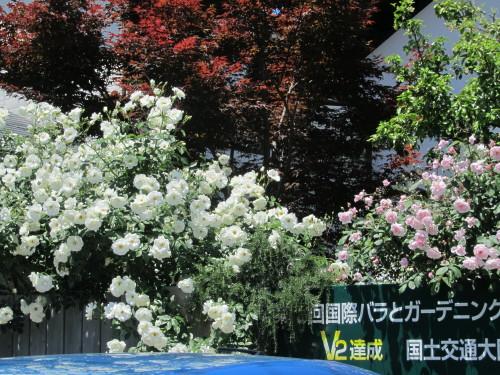 清水工業ガーデン0001