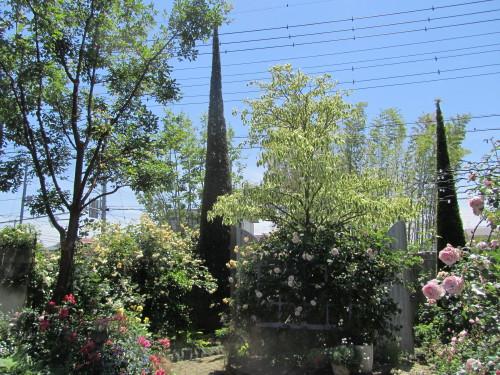 清水工業ガーデン0001_3