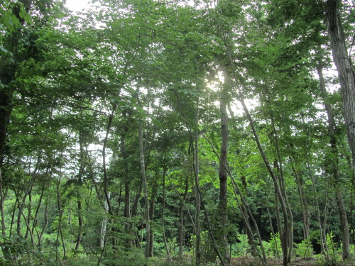 森の響0001_1
