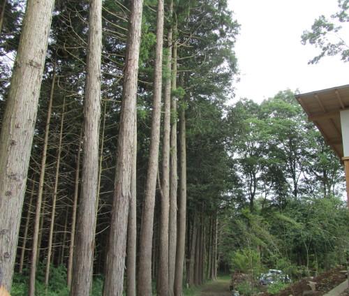 森の響0001_13