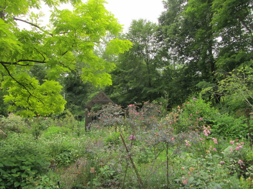 山の庭0001