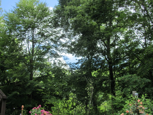 山の庭0001_5