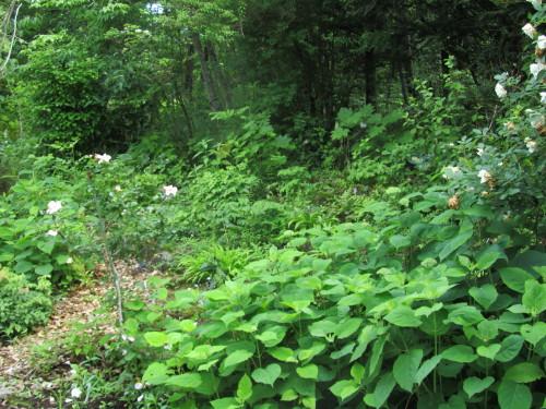 山の庭0001_6
