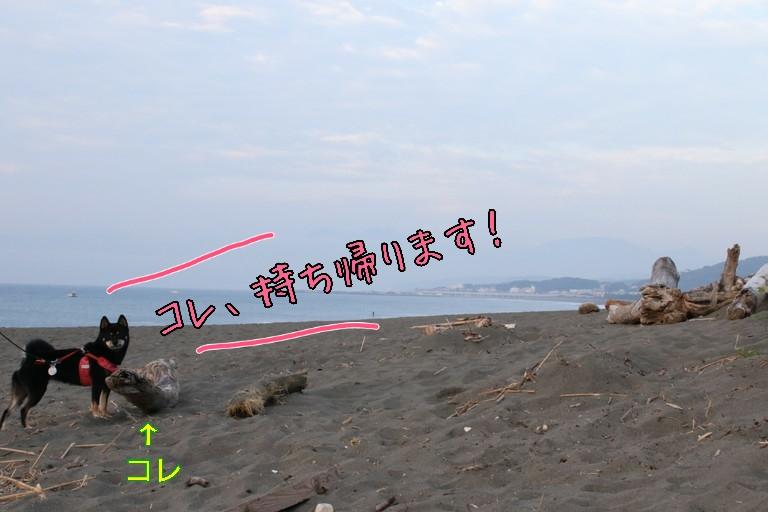 20161031095512ce1.jpg