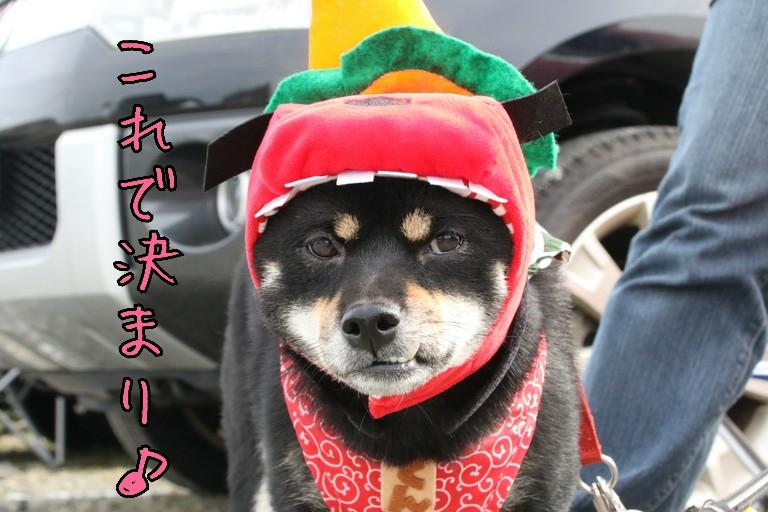 20161104193708985.jpg