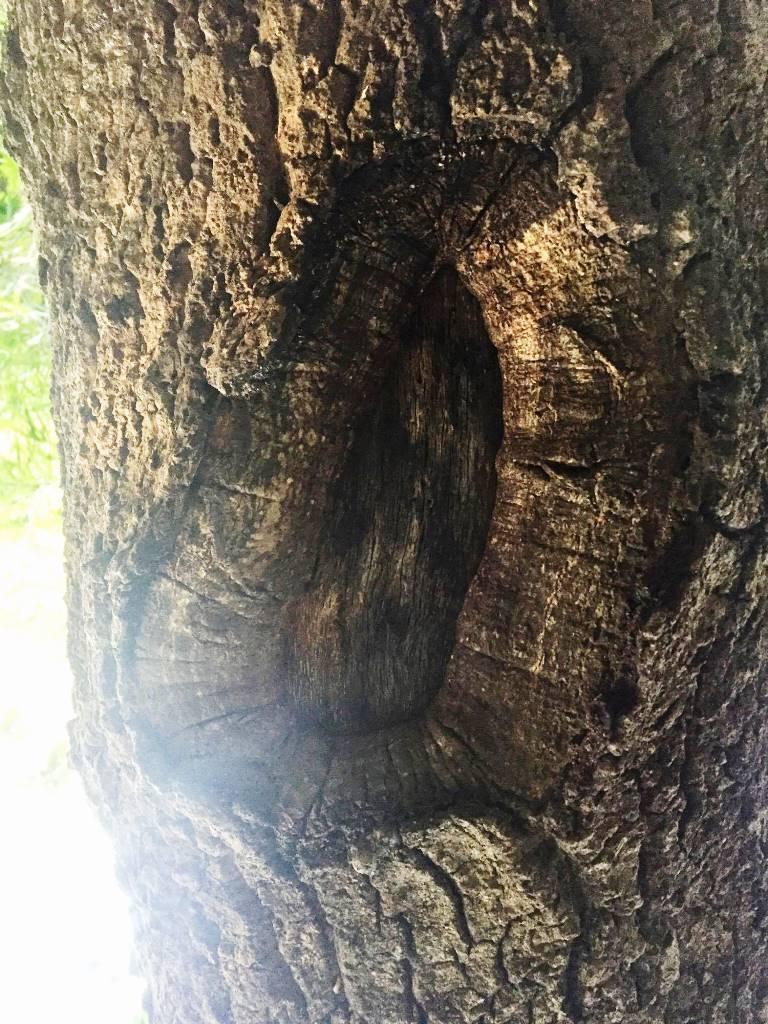 逆光木のコブ割れ目