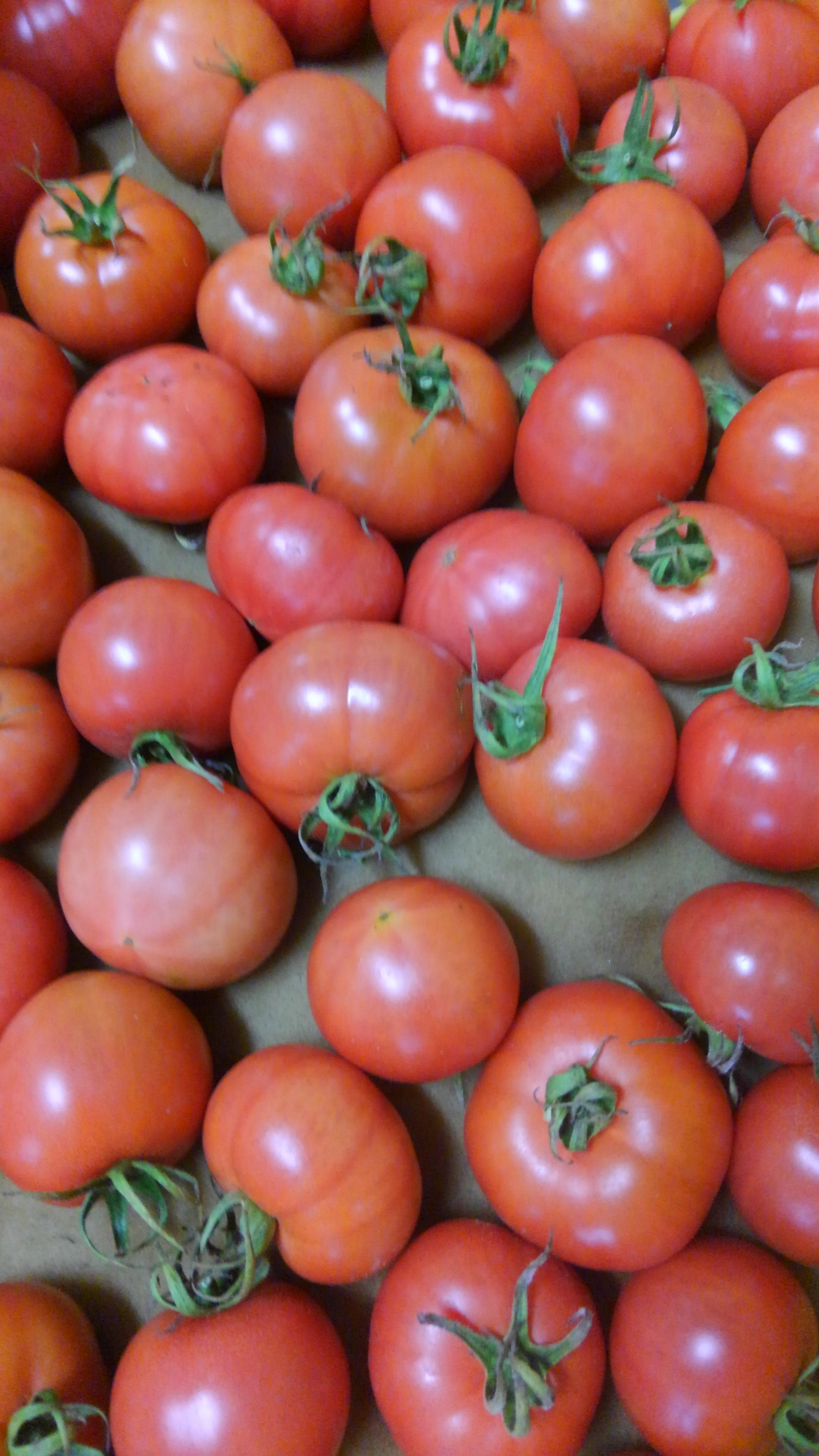 20160509トマト