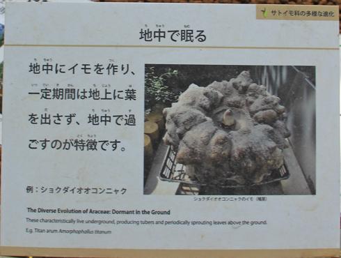 筑波実験植物園2016(2)-6