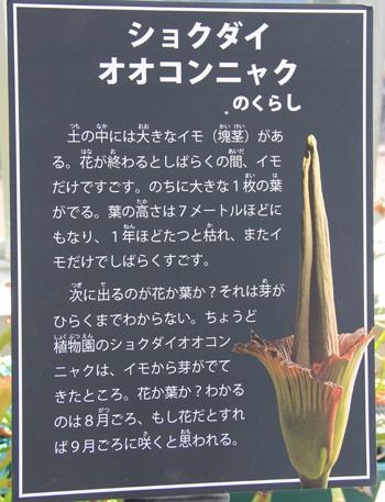 筑波実験植物園2016(2)-12