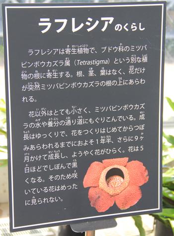 筑波実験植物園2016(2)-14