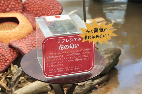 筑波実験植物園2016(2)-16