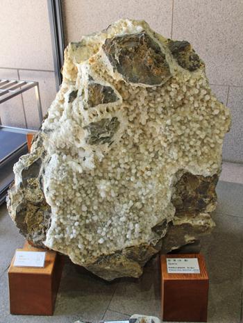 産総研地質標本館2016-3