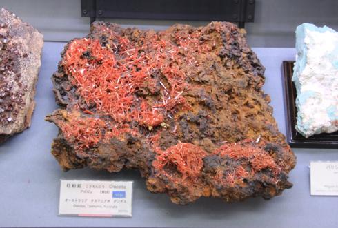 産総研地質標本館2016-11