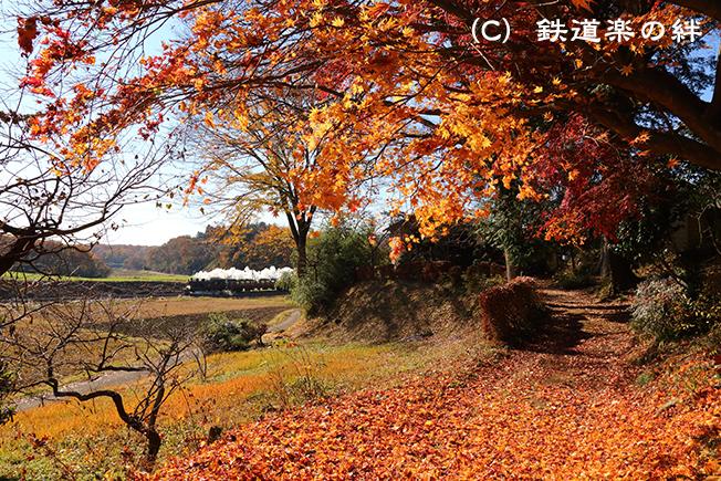 20121125笹原田5D3