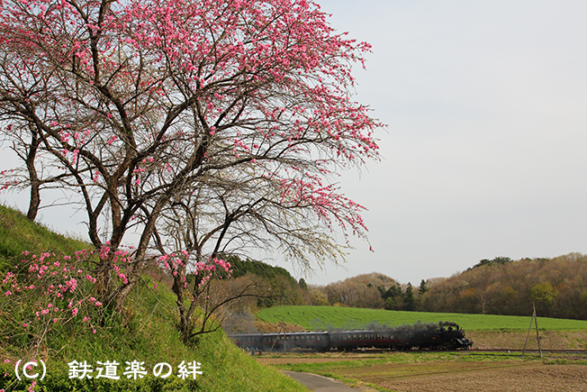 20130414笹原田025D3
