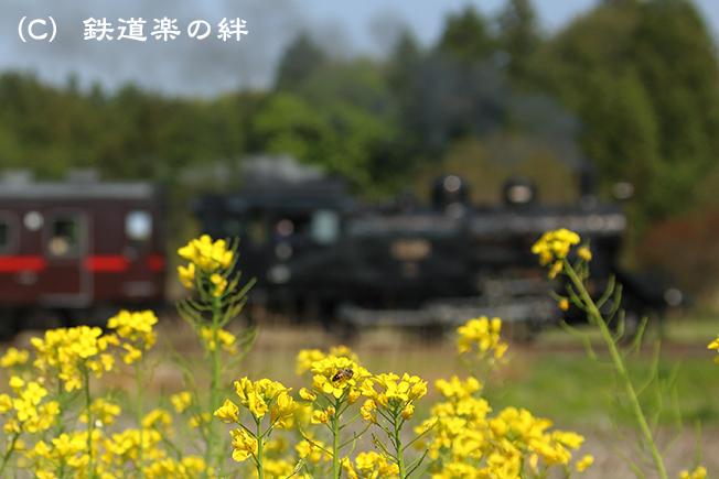 20130429多田羅035D3