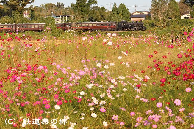20131013久下田025D3
