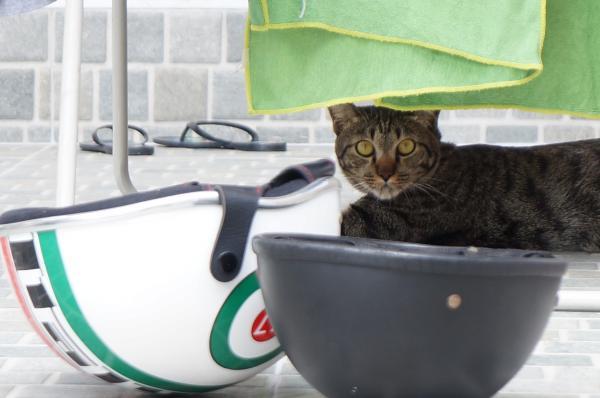 tubby cat 1