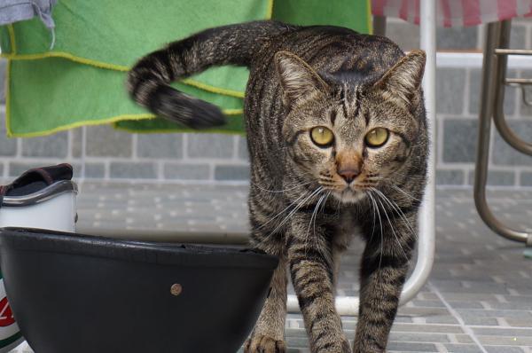 tubby cat 2