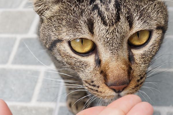 tubby cat 3