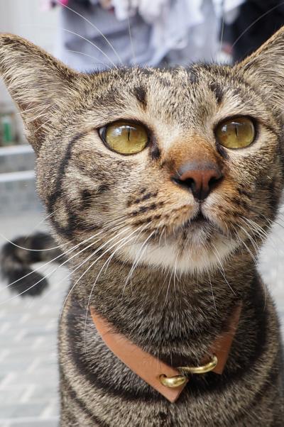 tubby cat 4