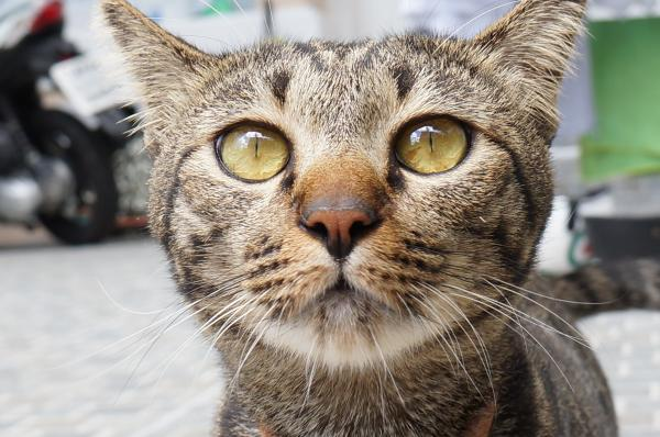 tubby cat 5
