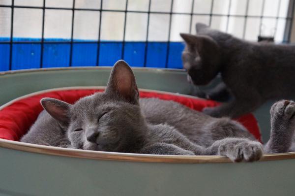 kitten krat cat 3