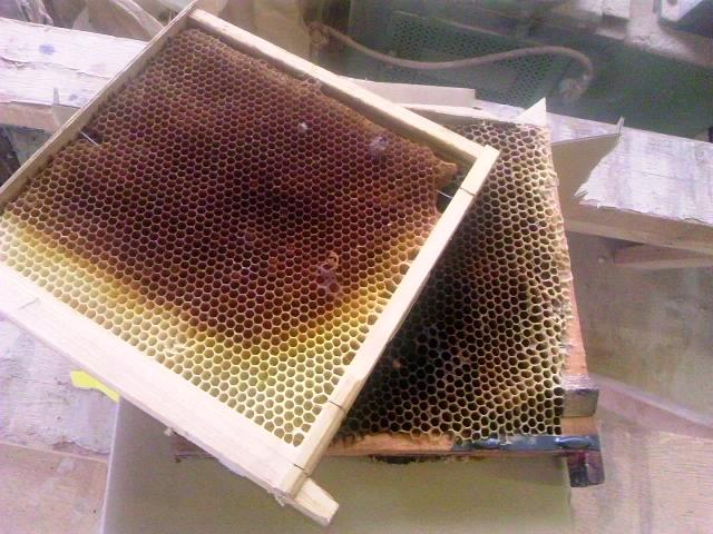 蜂の巣 001