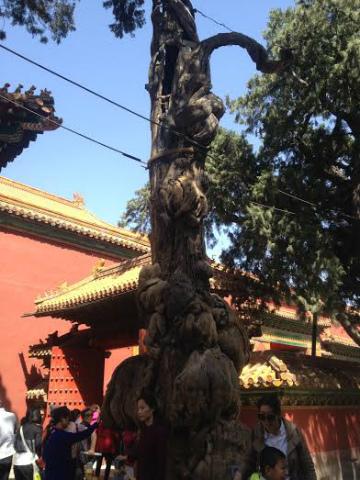 2016-5北京23