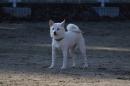 CSC_0408柴犬3