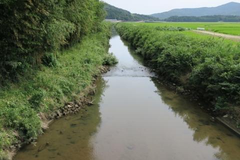 台風7号の恋瀬川。考案寺橋(片野地区)④