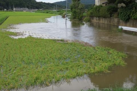 台風7号の恋瀬川。考案寺橋(片野地区)⑦