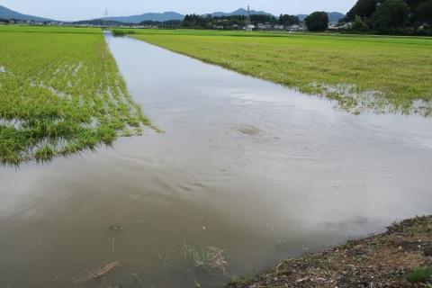 台風7号の恋瀬川。考案寺橋(片野地区)⑩