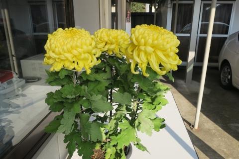 「素敵な養菊のお花を贈って頂きました!」③