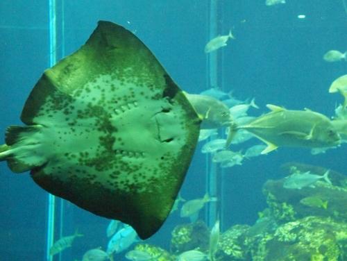 500水族館 160507002