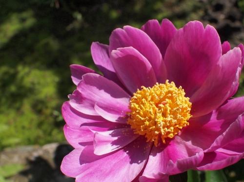 500美しい花の中に蟻がいる160513