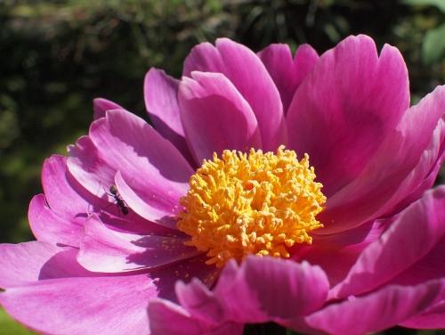 500美しい花の中に蟻がいる1605132