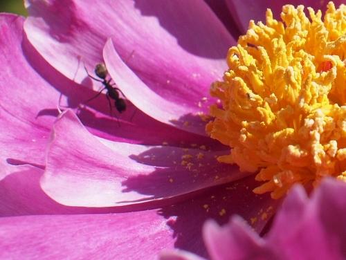 500美しい花の中に蟻がいる1605133