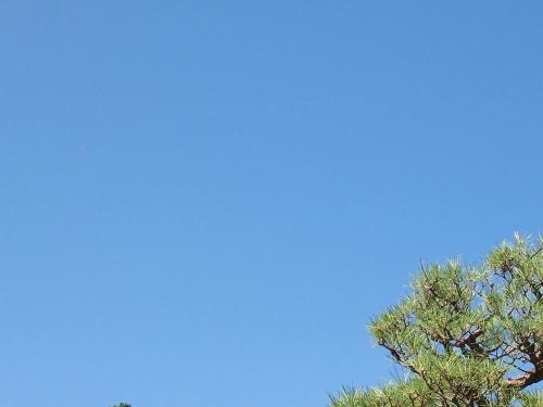 500松と青空3