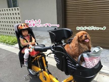 嵐丸 2016.5.24-1