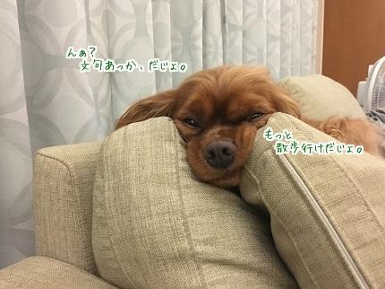 嵐丸 2016.9.23-2