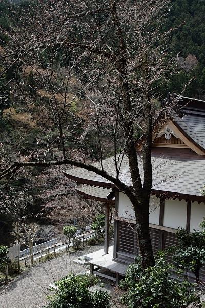 別子山・圓通寺 160412 02