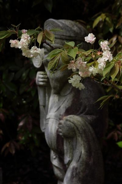 浄土寺・鬱金 160413 02