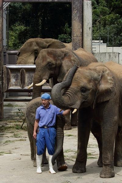 Afrika Elephant 150912 01