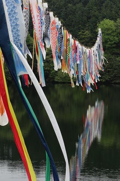 源平谷池・鯉のぼり 160425 02